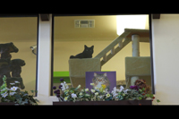 Photo of a Cat overseeing the Central Pet Retail Facilities